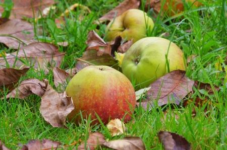 fallen fruit: windfall 04