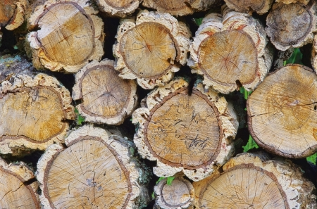 stack of wood from cork oak Stock Photo - 17081582