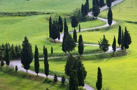 cypress curve  photo