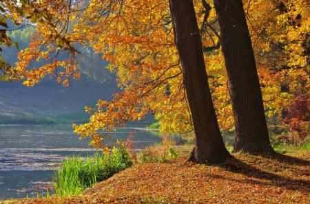 Oak tree in fall  photo