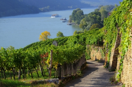 Wachau vineyard