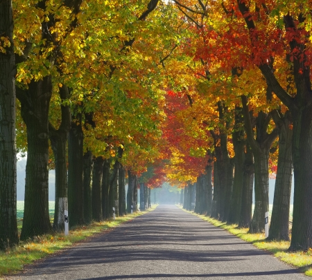 avenue in fall  photo