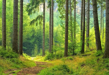 foresta: foresta Archivio Fotografico