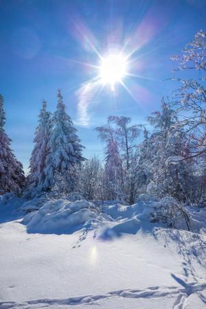 erzgebirge: forest in winter and sun