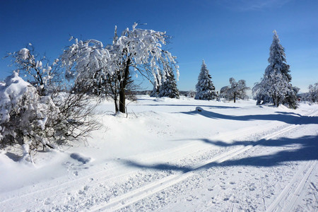 erzgebirge: forest in winter Stock Photo