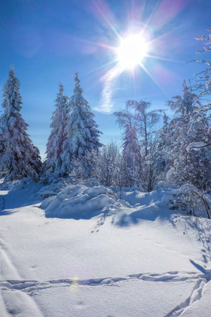 Erz: forest in winter and sun