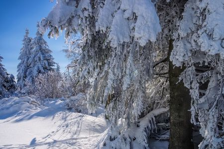 Erz: forest in winter Stock Photo