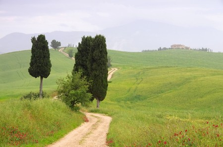 podere: Tuscany cypress trees with track