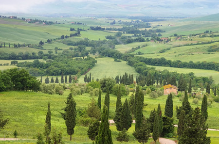 val d'orcia: Tuscany cypress trees with track