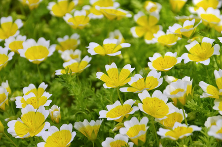 poached egg plant in white and yellow