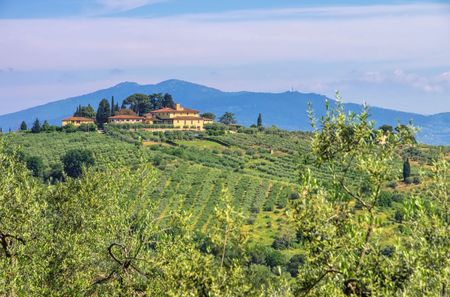 olive groves: Chianti landscape with olive groves