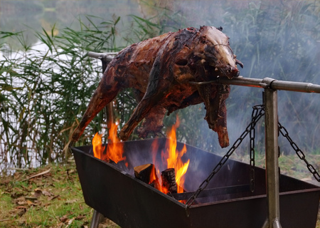 pigling: traditional wild boar on spit and wooden fire