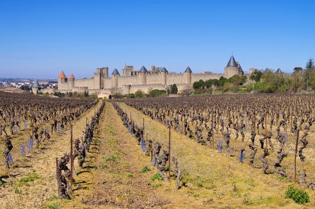 roussillon: Castle of Carcassonne and vineyard in winter, southern France Editorial