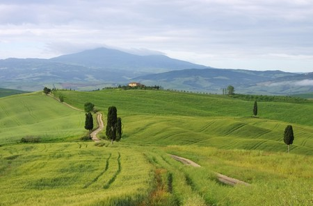 terrapille: Tuscany cypress trees with track