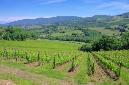 arboleda: Chianti viña