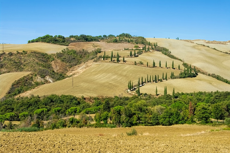 podere: cypress curve in fall, Tuscany in Italy Stock Photo