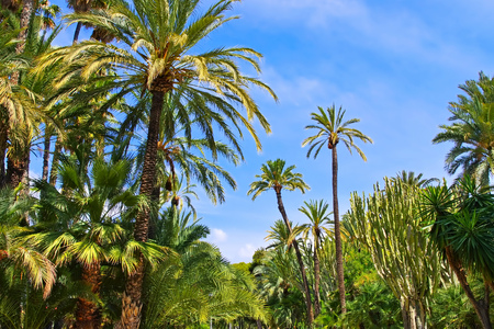 Elche El Palmeral, palm grove near Alicante, Costa Blanca