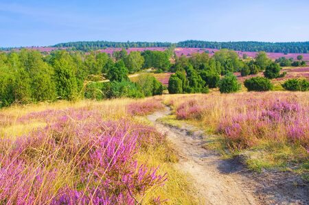 landscape Lueneburg Heath in autumn near Wilsede