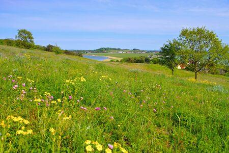 spring flower meadow on island of Ruegen in northern Germany