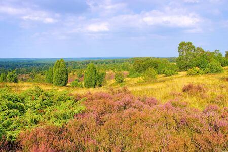 landscape Lueneburg Heath in autumn near Wilsede, view from the hill