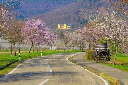 Edenkoben Villa Ludwigshoehe landscape, during the almond blossom in spring , Germany 写真素材