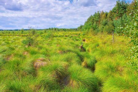 the Schweimker swamp green nature landscape in Germany
