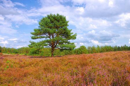 landscape Lueneburg Heath in autumn near Bodenteich