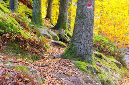 in Palatinate Forest in autumn, Germany 写真素材