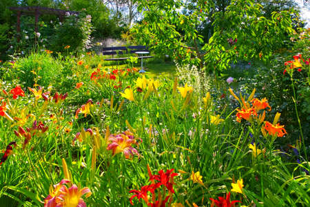 a garden with many daylily flowers in summer