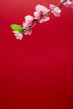 Spring Festival material