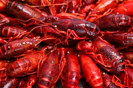 Crayfish Stockfoto