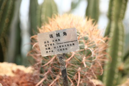 Cactus tropical plant