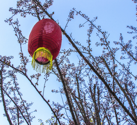 ye: The red lanterns hanging in the branches of peach