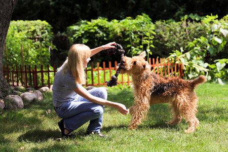 airedale terrier dog: Young woman playing with her dog airedale terrier ona summer day