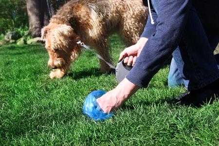 男を拾う犬の糞を掃除 写真素材