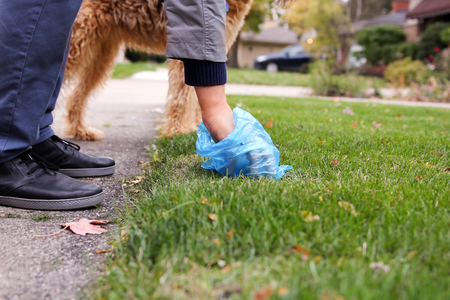 Homme ramasser / nettoyer les excréments de chien Banque d'images - 89185079