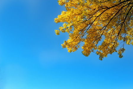 Colorful leaves  in the autumn park Autumn leaves sky background Stock Photo