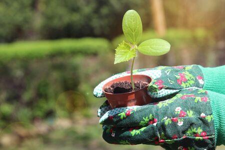 woman doing gardening work with  organic green plant Standard-Bild