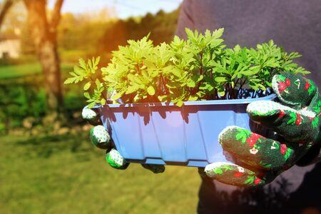 organic green plant outside