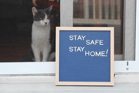 Stay home quarantine coronavirus pandemic prevention. Beautiful cat stays near the open window 版權商用圖片
