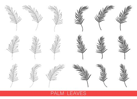 Set of vector palm leaves isolated on white background. Exotic tropical plants. Design element for card,print, wallpaper,plant shop, travel agency. Contour and silhouette. Black and white  イラスト・ベクター素材