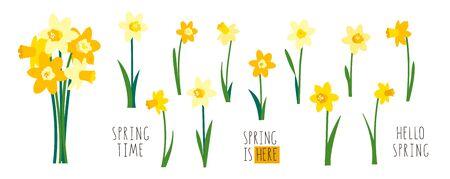 Vektorsatz gelbe Narzissen lokalisiert auf weißem Hintergrund. Vorfrühlingsgartenblumen. Strauß Narzissen. ClipArt für helle festliche Grußkarten, Poster, Banner. Handgeschriebener Schriftzug.