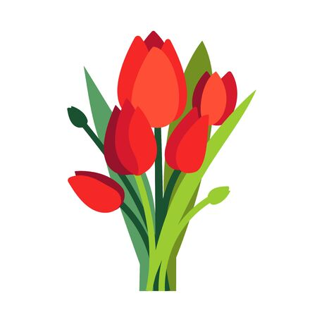 Festive vector illustration with branches of tulip flowers and green leaves. Bouquet of red tulips isolated on white. Floral composition for bright spring design. Greeting card template. Womens Day.