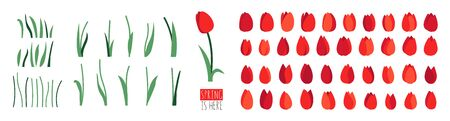 Vector set of positive floral illustrations isolated on white background. Early spring garden flowers. Red tulip. Clip art for bright festive greeting card, poster, banner. Womens Day