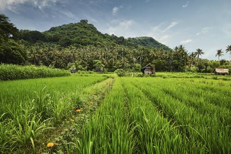 Landscape of rice terrace in Bali, Indonesia
