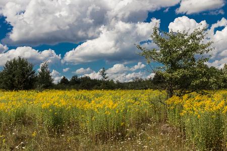 manzana verde: Flores amarillas en un prado verde con �rboles de manzana y un cielo azul brillante y las nubes esponjosas