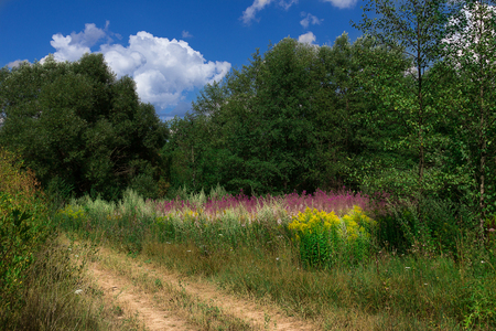 Overgrown meadow with beautiful multicolored flowers with paths and trees on the background of blue sky