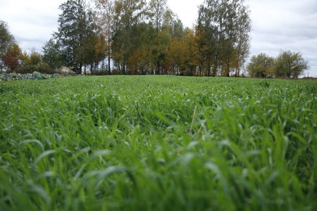Green grass in the forest