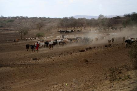 Pastori di mucche in Tanzania Archivio Fotografico - 87730375