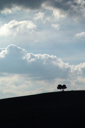 Un paio di alberi sulle colline italiane Archivio Fotografico - 88936256